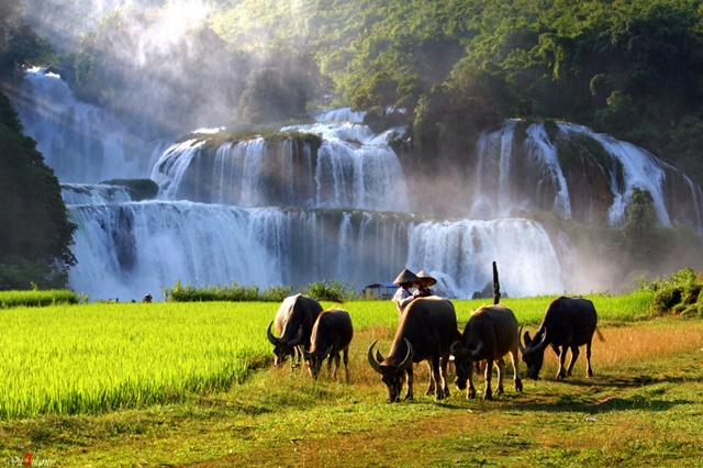 Ban Gioc Waterfall - the largest and most beautiful waterfall in Vietnam