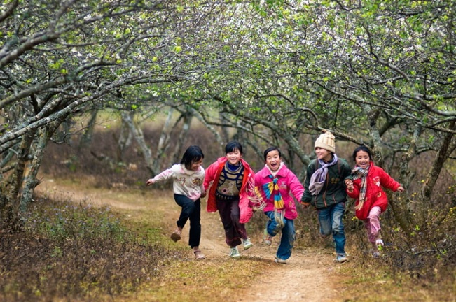 Plum blossoms in Ha Giang